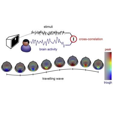 The Hidden Spatial Dimension of Alpha: 10-Hz Perceptual