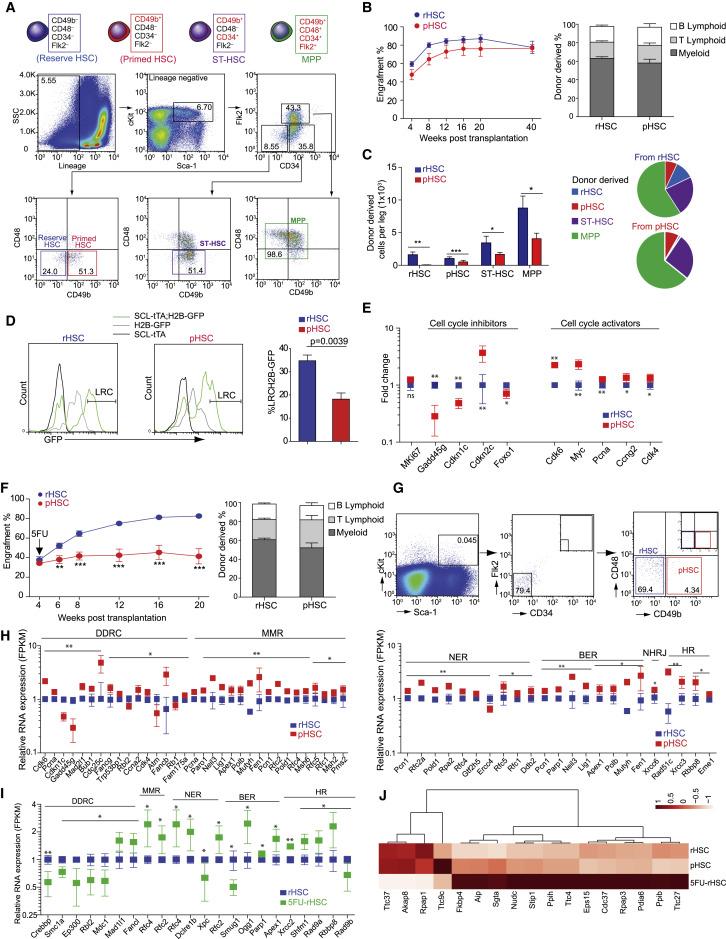 N-Cadherin-Expressing Bone and Marrow Stromal Progenitor Cells