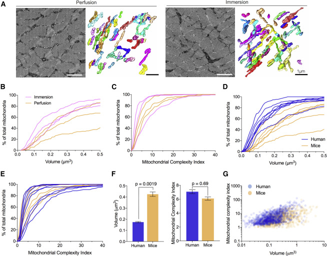 Quantitative 3d Mapping Of The Human Skeletal Muscle Mitochondrial Network Sciencedirect