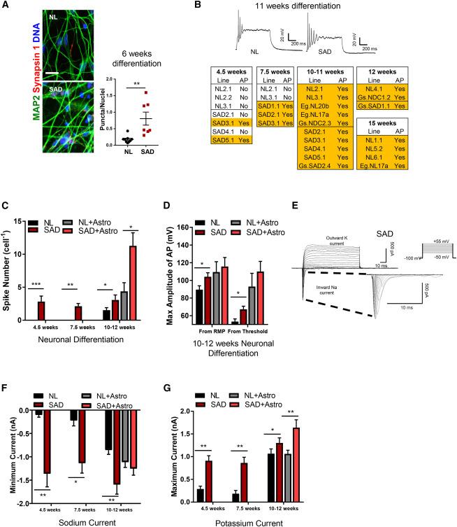 REST and Neural Gene Network Dysregulation in iPSC Models of