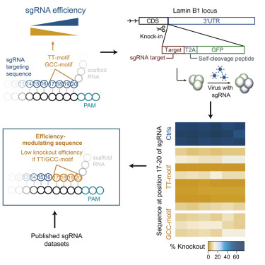sgRNA Sequence Motifs Blocking Efficient CRISPR/Cas9-Mediated Gene