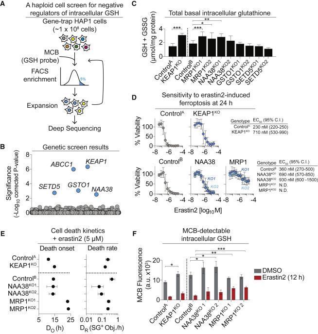 A Genome-wide Haploid Genetic Screen Identifies Regulators of