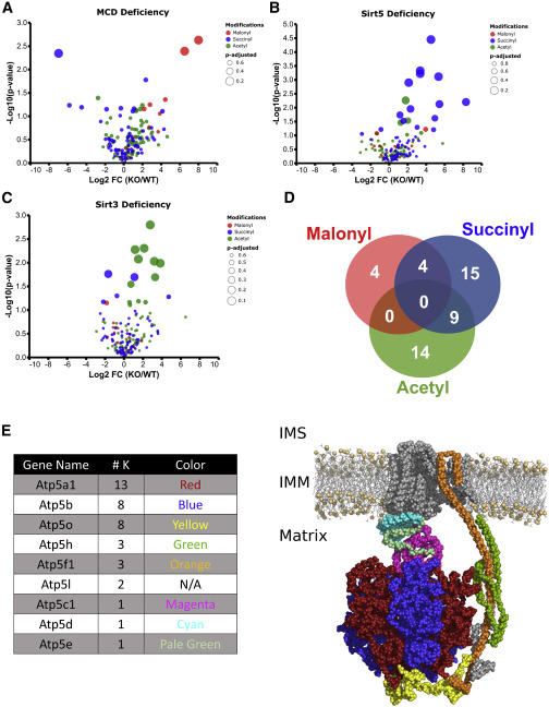 Respiratory Phenomics across Multiple Models of Protein