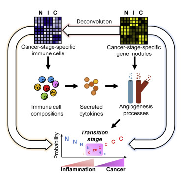 Immune Cell Types and Secreted Factors Contributing to