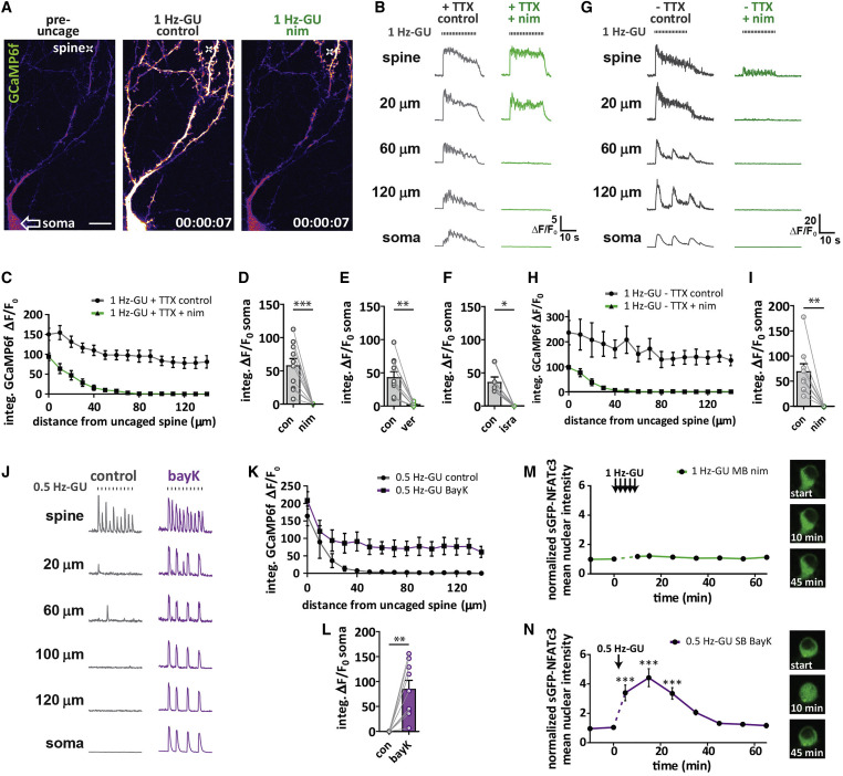 Synapse-to-Nucleus Communication through NFAT Is Mediated by