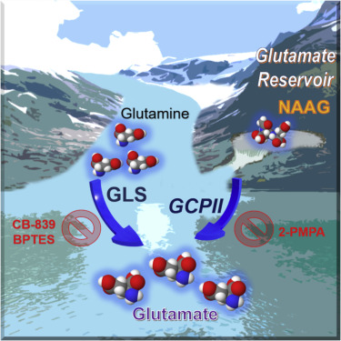 Uncovering the Role of N-Acetyl-Aspartyl-Glutamate as a