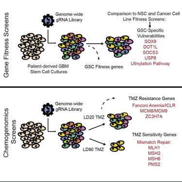 Genome-Wide CRISPR-Cas9 Screens Expose Genetic