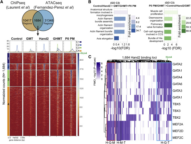 Hand2 Selectively Reorganizes Chromatin Accessibility to