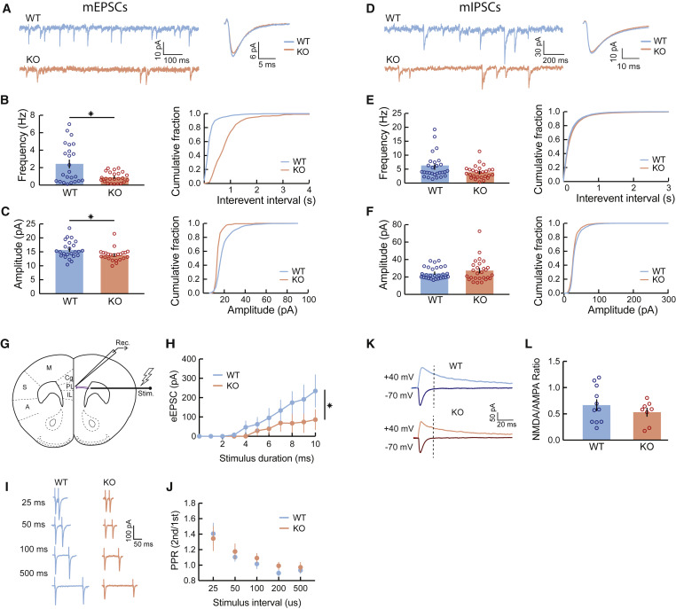 Reduced Prefrontal Synaptic Connectivity and Disturbed