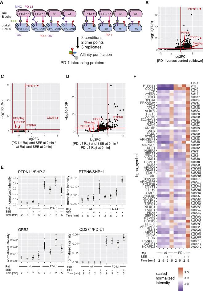 Quantitative Interactomics in Primary T Cells Provides a