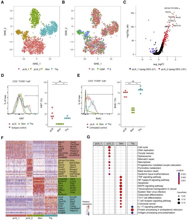 Single-Cell Transcriptomics Identifies the Adaptation of