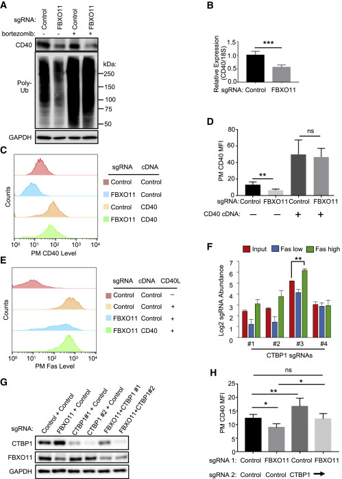 CRISPR/Cas9 Screens Reveal Multiple Layers of B cell CD40