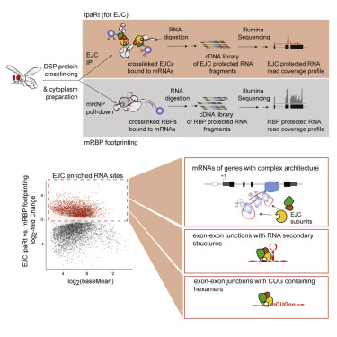 The Transcriptome-wide Landscape and Modalities of EJC