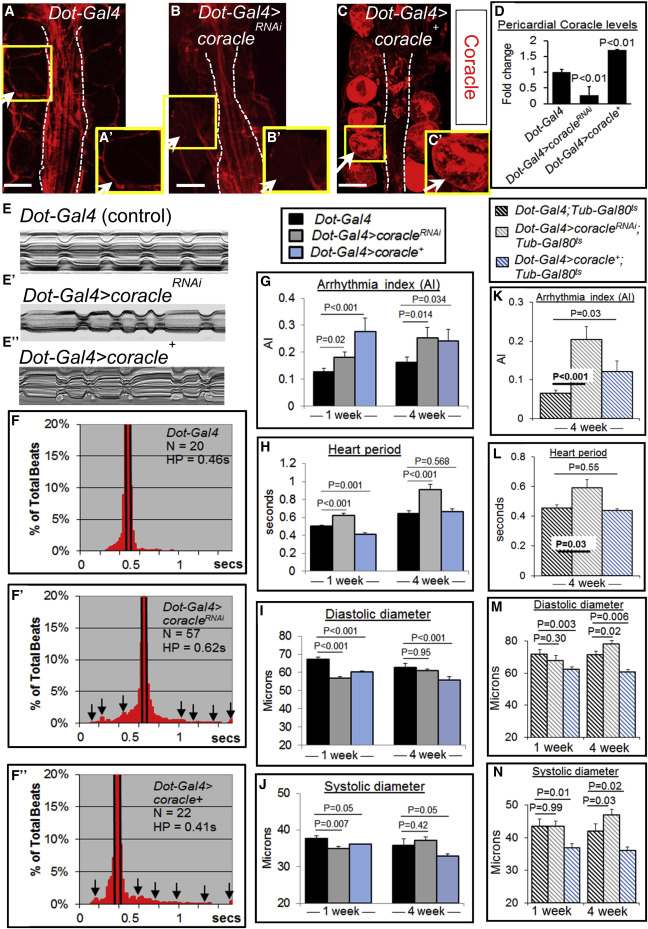 Select Septate Junction Proteins Direct ROS-Mediated