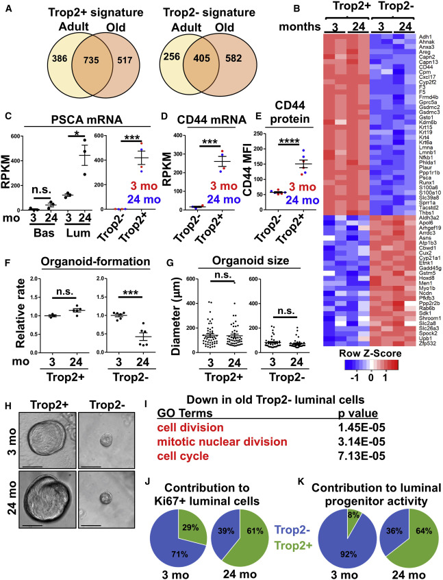 Expansion of Luminal Progenitor Cells in the Aging Mouse and Human