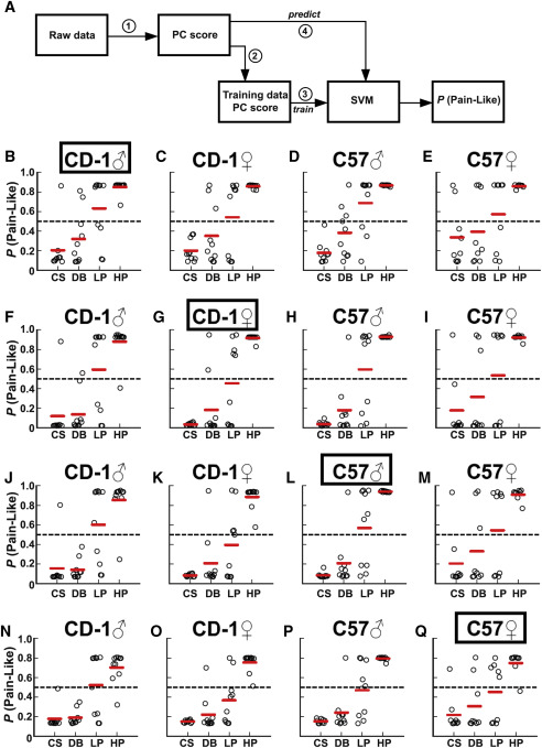 Development of a Mouse Pain Scale Using Sub-second Behavioral