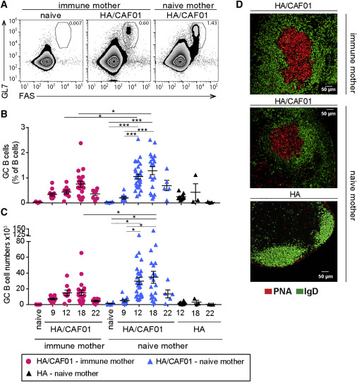 Maternal Antibodies Inhibit Neonatal and Infant Responses to