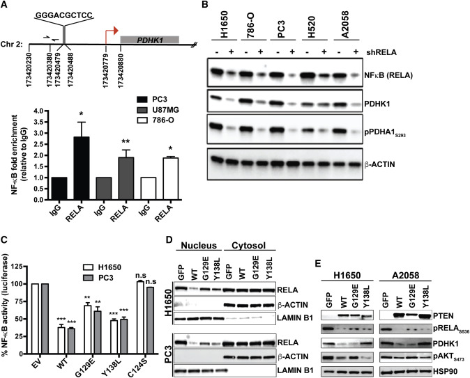 Synthetic Essentiality of Metabolic Regulator PDHK1 in PTEN