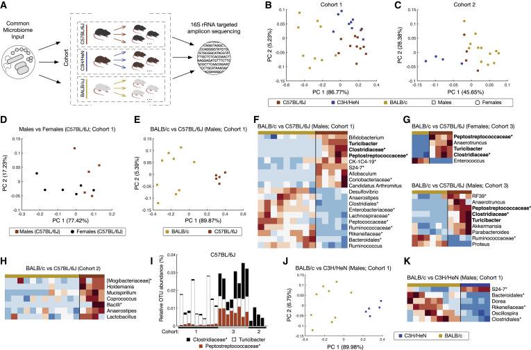Polymorphic Immune Mechanisms Regulate Commensal Repertoire
