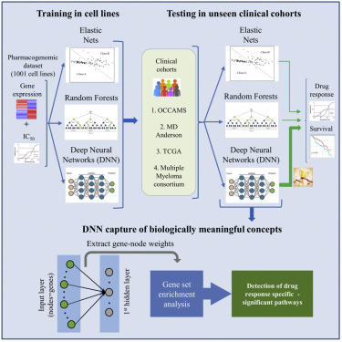 A Deep Learning Framework For Predicting Response To Therapy In Cancer Sciencedirect