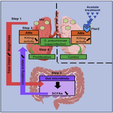 dysbiosis treatment natural