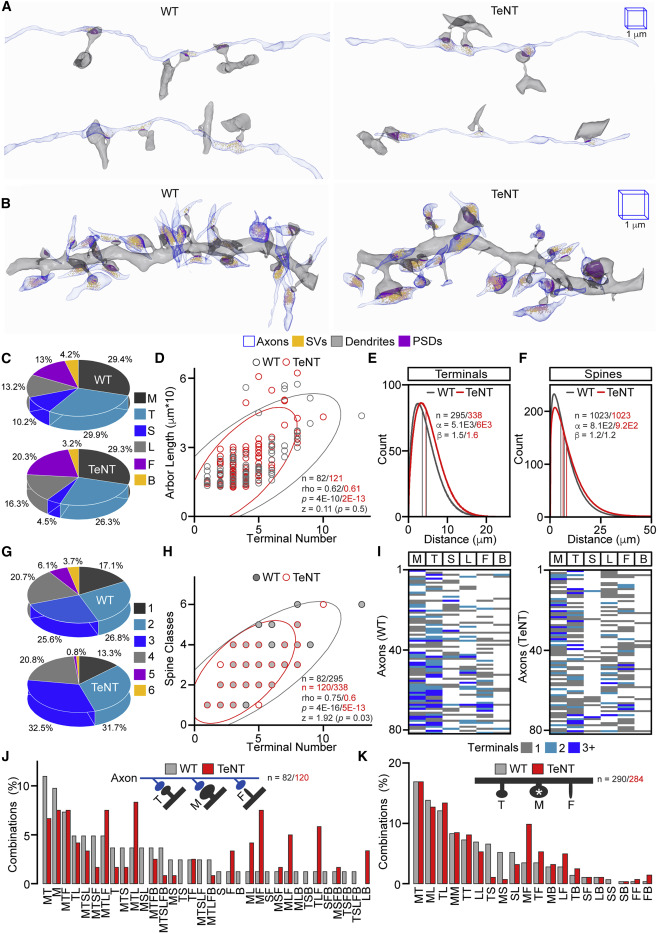 Diversity Of Chemical Synapses