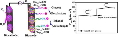 Nitrogen-doped hollow carbon nanospheres for high-energy-density
