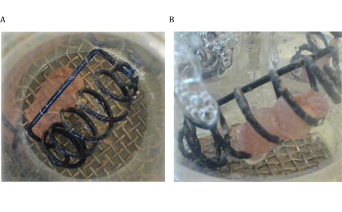Capsule shell material impacts the in vitro disintegration and