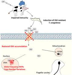 Genomic analysis of Isometamidium Chloride resistance in