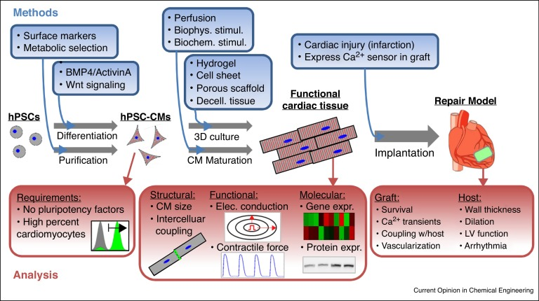 Human Cardiac Tissue Engineering From Pluripotent Stem Cells To