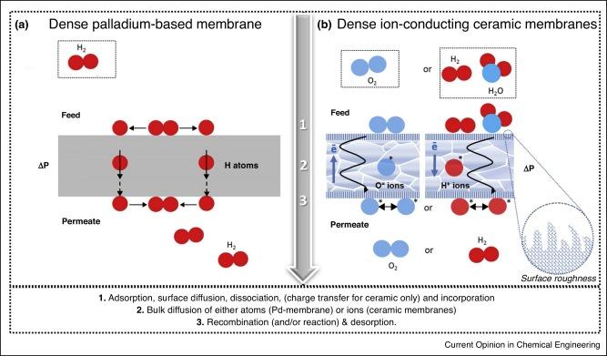 Resume membrane adsorption analysis essay writing site us