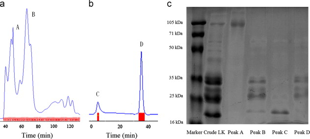 Preparation of pegylated lumbrokinase and an evaluation of its
