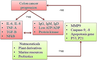 Nutraceuticals As Potential Therapeutic Agents For Colon Cancer A Review Sciencedirect