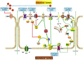 Current developments in pharmacological therapeutics for