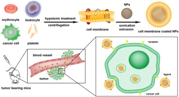 cell membrane based nanoparticles a new biomimetic platform for