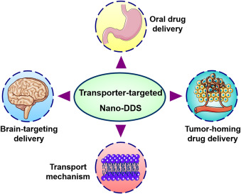 Targeting Brains Star Shaped Cells May >> Emerging Transporter Targeted Nanoparticulate Drug Delivery Systems