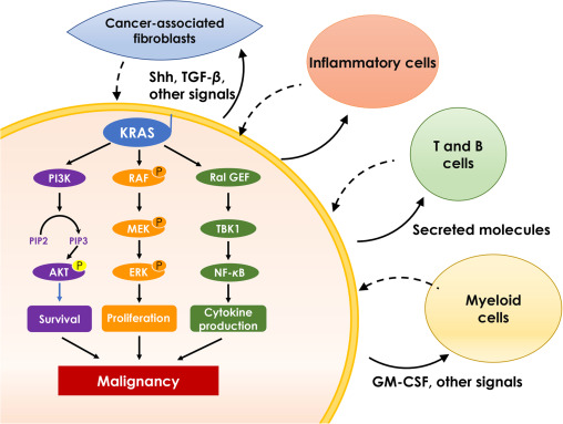 Targeting The Untargetable Kras In Cancer Therapy Sciencedirect