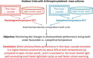 Diurnal changes of photosynthesis and growth of Arthrospira platensis cultured in a thin-layer cascade and an open pond.