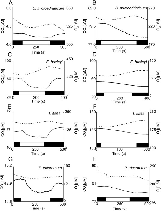 Investigation Into The Co2 Concentrating Step Rates Within The