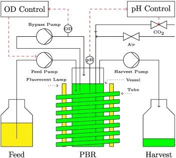 Optimizing turbidostatic microalgal biomass productivity: A