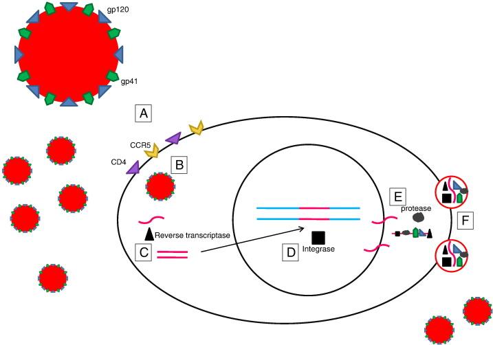 C-C chemokine receptor type fi...