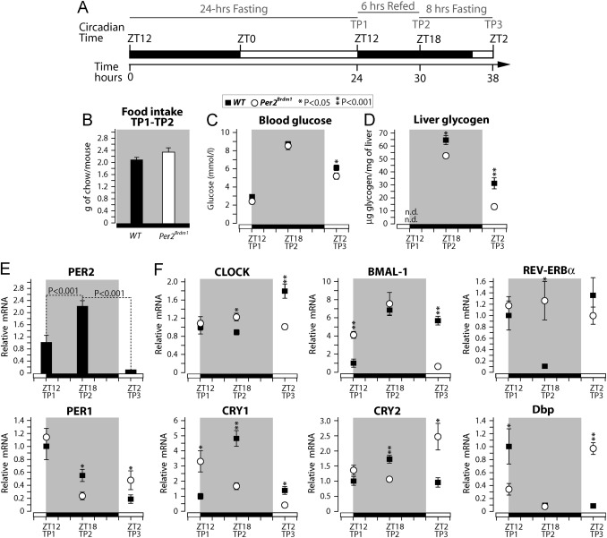 PER2 promotes glucose storage to liver glycogen during feeding and