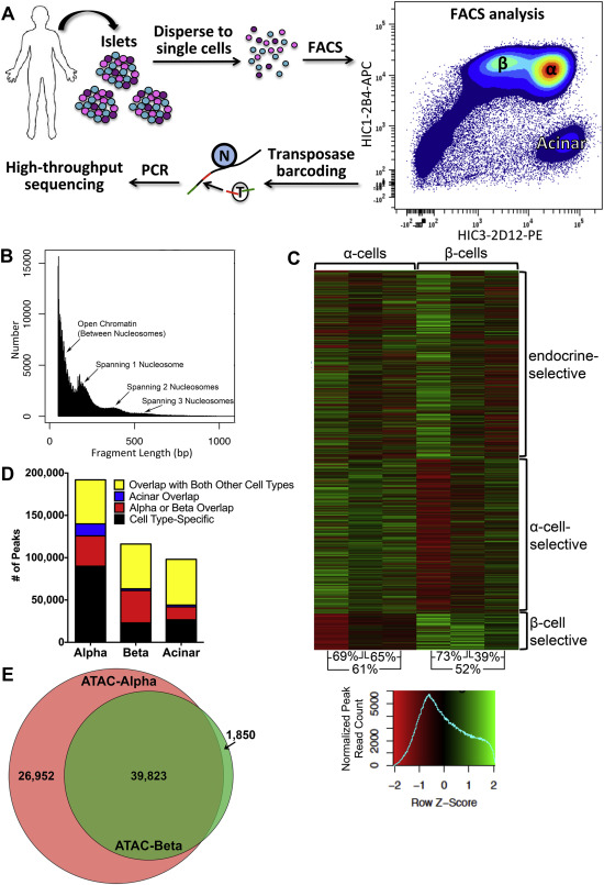 Integration Of Atac Seq And Rna Seq Identifies Human Alpha Cell And