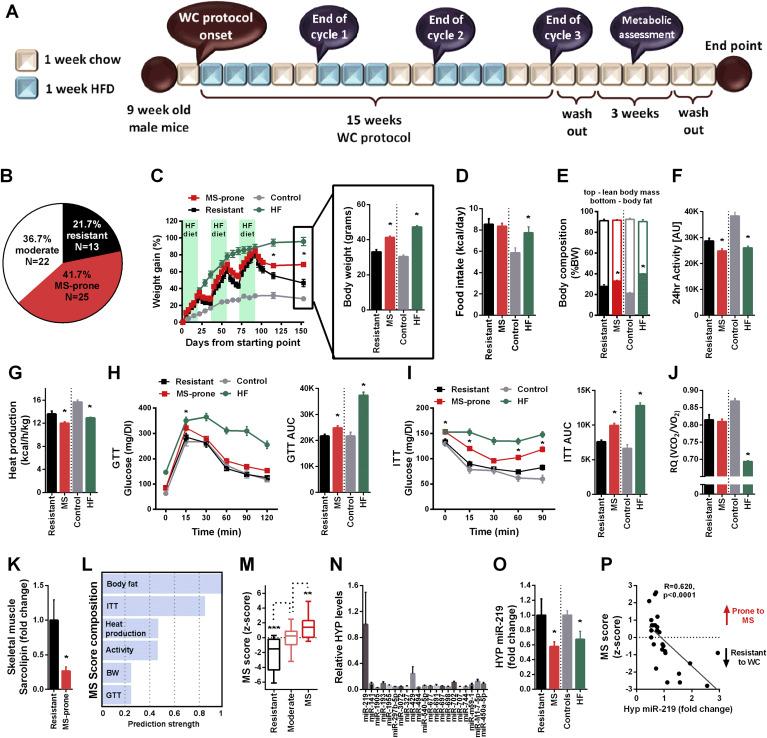 Hypothalamic miR-219 regulates individual metabolic