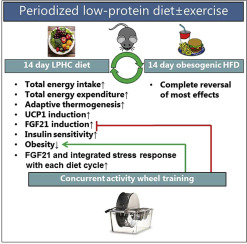 low protein diet effect on stress