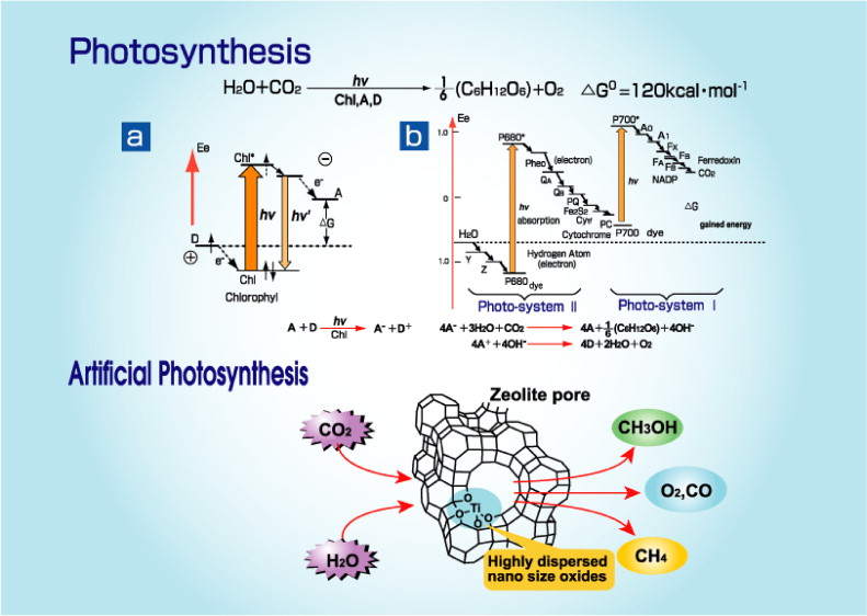 Photocatalytic reduction of co2 with h2o on highly dispersed ti description of the reaction schemes in the photosynthesis reaction in green plant above and the visible light responsive ti oxide single sites ccuart Choice Image