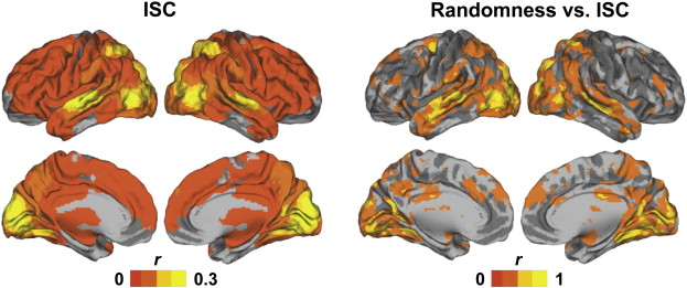 The brains of high functioning autistic individuals do not