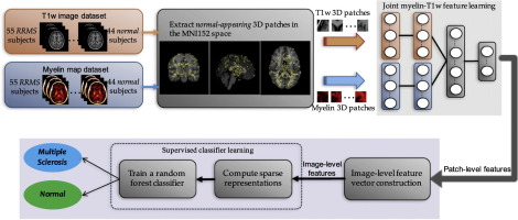 Deep learning of joint myelin and T1w MRI features in normal