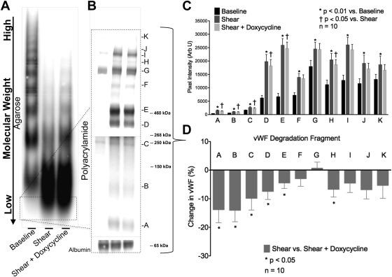 Inhibition Of Adamts 13 By Doxycycline Reduces Von Willebrand Factor