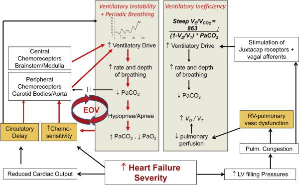 Cardiopulmonary Exercise Testing in Heart Failure